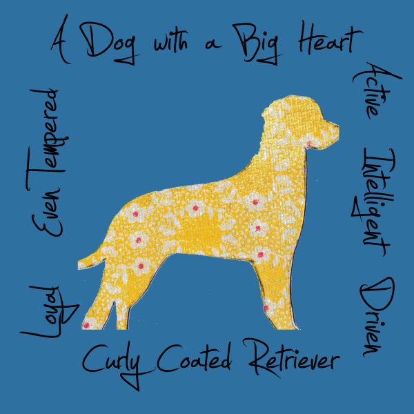 Curly Coated Retriever Dog Breed Traits Print