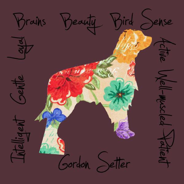 Gordon Setter Dog Breed Traits Print