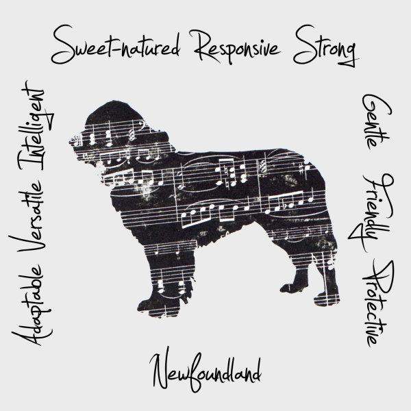 Newfoundland Dog Breed Traits Print