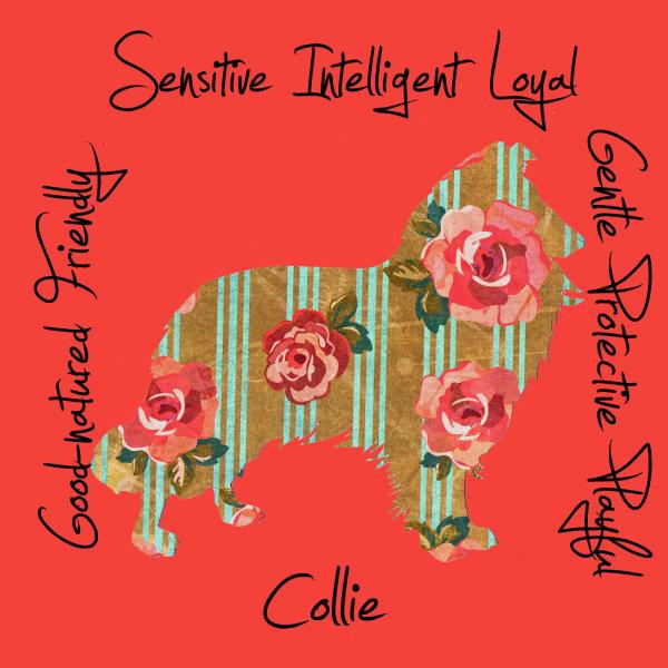 Collie Dog Breed Traits Print