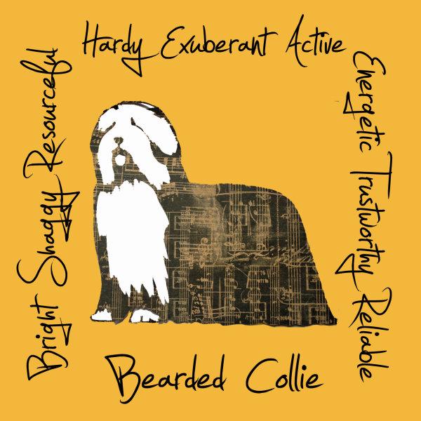 Bearded Collie Dog Breed Traits Print