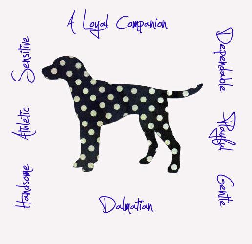 Dalmation Dog Breed Traits Print