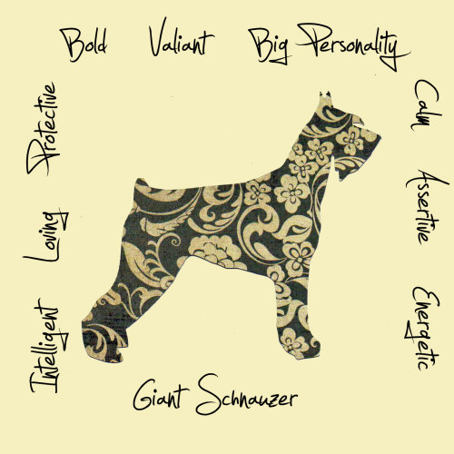 Giant Schnauzer Dog Breed Traits Print