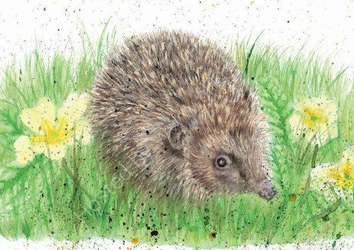 Hedgehog - Wildlife Print by Clare Thompson