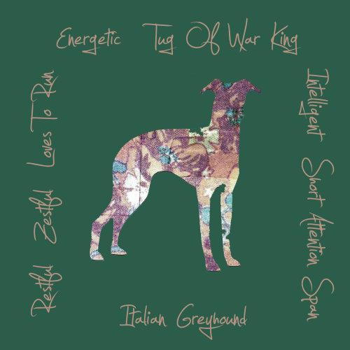Italian Greyhound Dog Breed Traits Print
