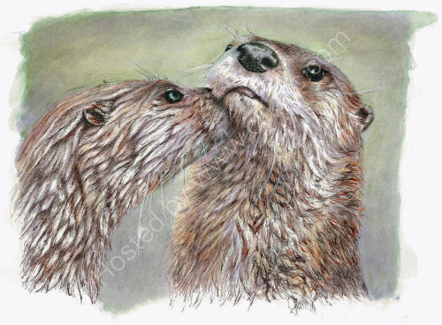 Otters - Wildlife Print by Clare Thompson