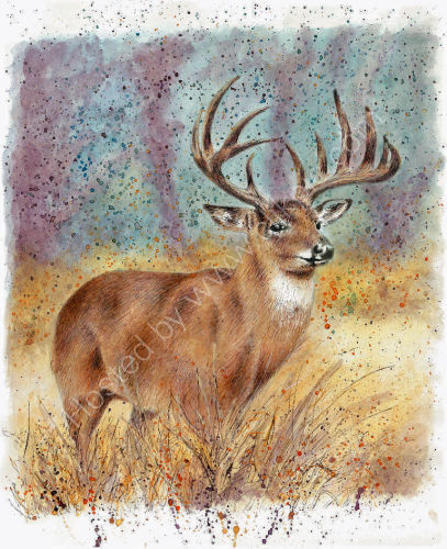 Deer - Wildlife Print by Clare Thompson
