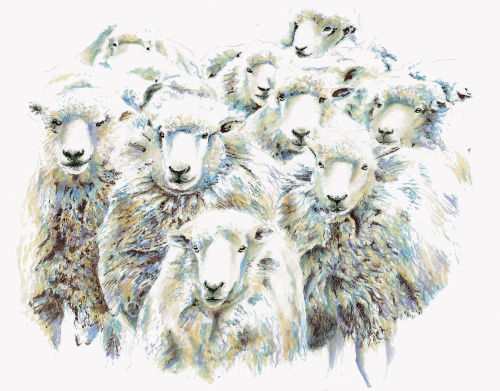 Flock of Sheep - Wildlife Print by Clare Thompson