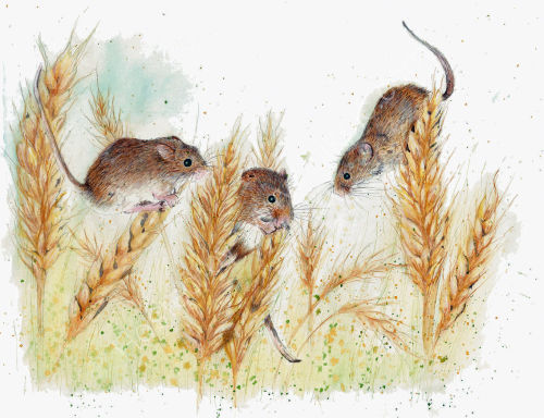 Field Mice - Wildlife Print by Clare Thompson