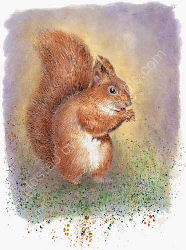 Squirrel - Wildlife Print by Clare Thompson