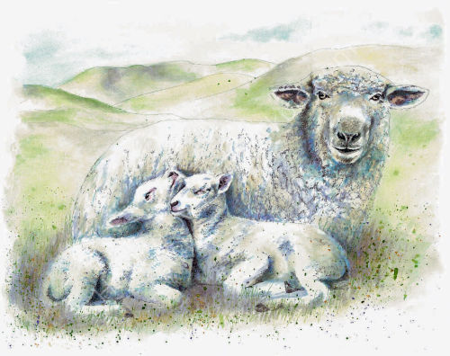 Sheep and Lambs - Wildlife Print by Clare Thompson