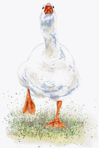 Goose - Wildlife Print by Clare Thompson