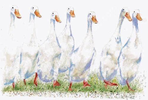 Ducks - Wildlife Print by Clare Thompson