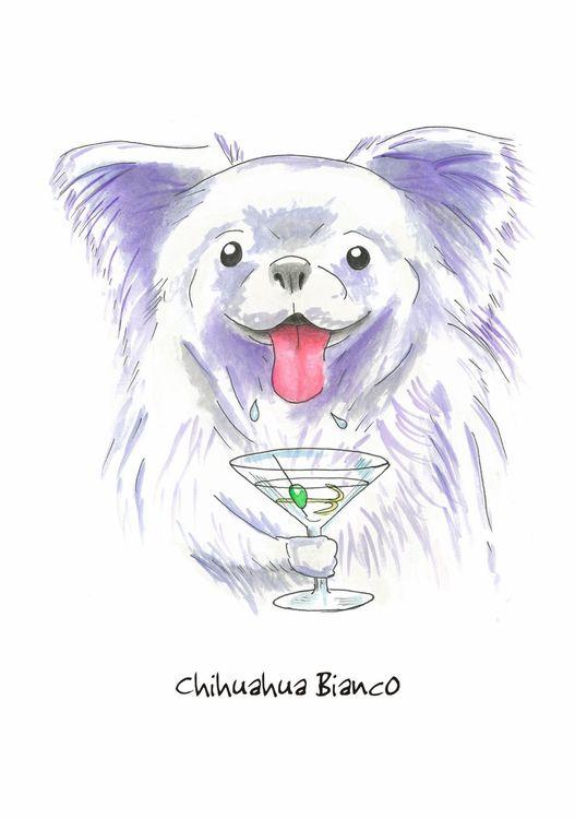 Chihuahua Bianco - Blank Card
