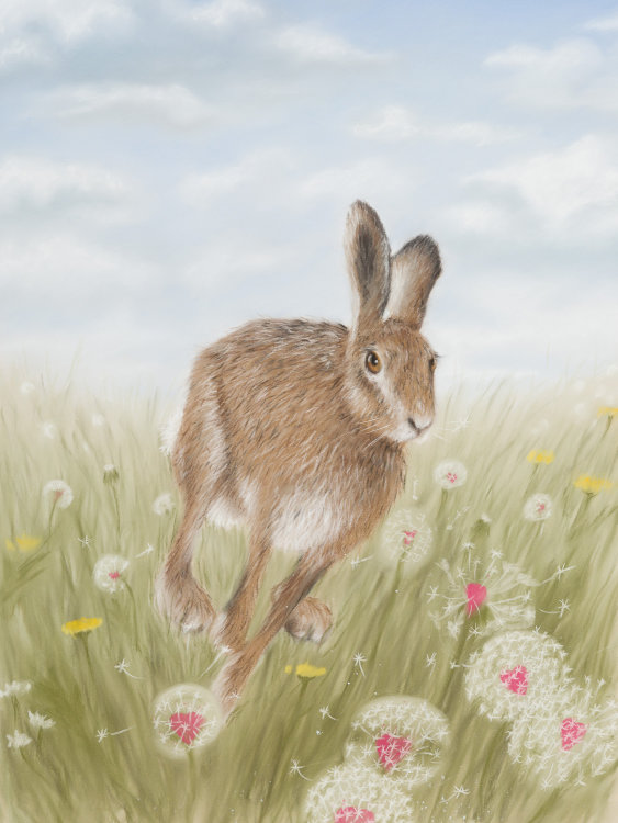 Tempus Fugit - Wildlife Print by Clare Thompson