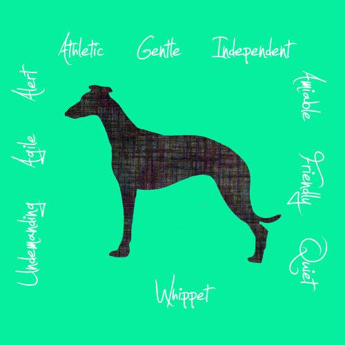 Whippet Dog Breed Traits Print