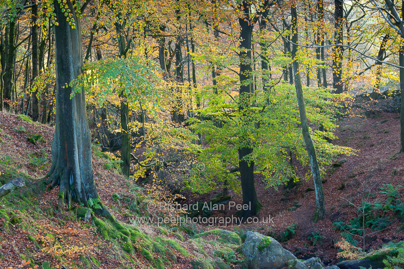 Woodland at Dean Clough Worth Valley West Yorkshire England UK