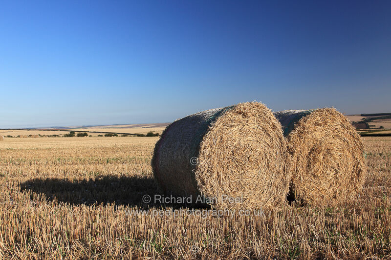 Straw bales - harvest time Foxholes North Yorkshire England UK