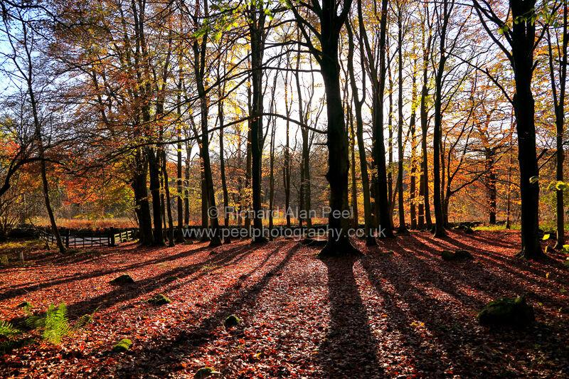 Autumn Grass Wood Grassington North Yorkshire England UK