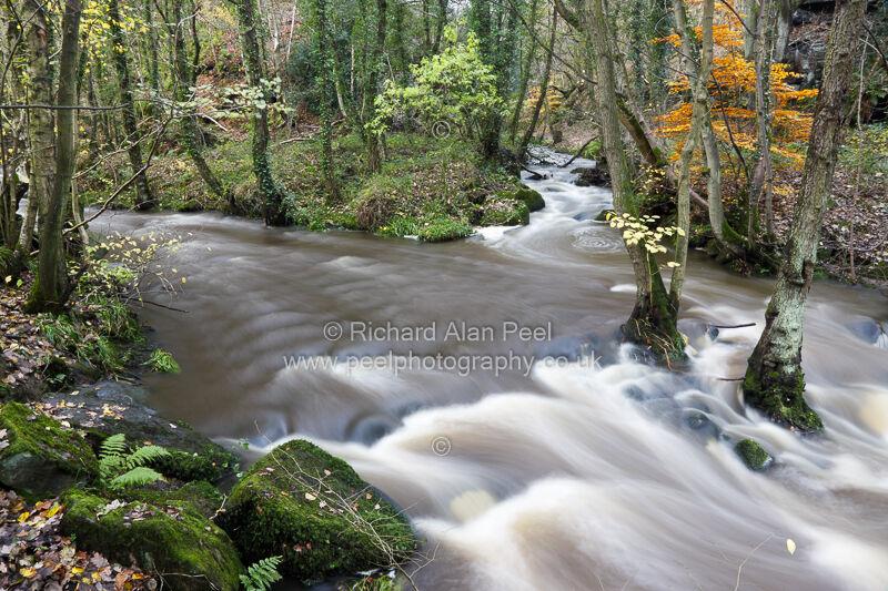 Autumn - Stream confluence Goit Stock Wood Harden West Yorkshire England UK