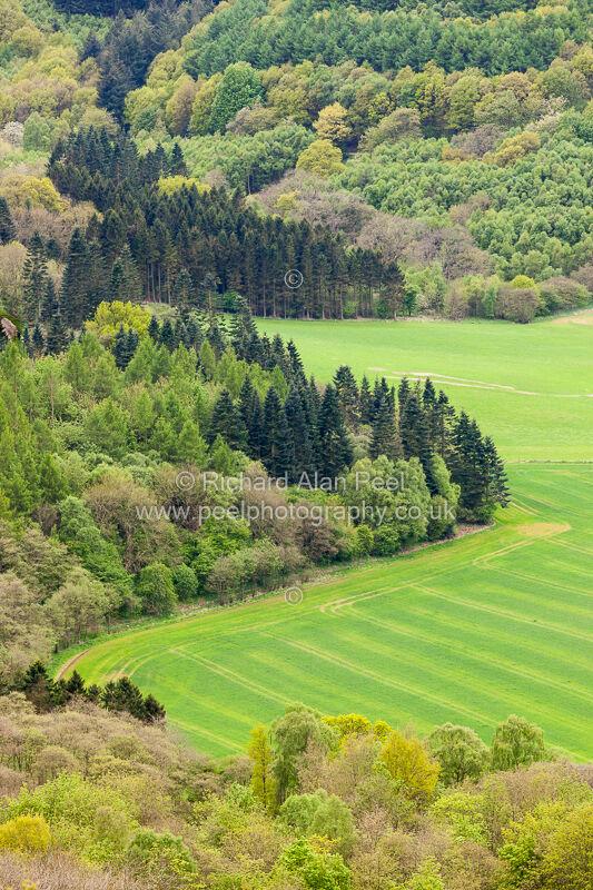 Hood Hill Plantation North Yorkshire UK