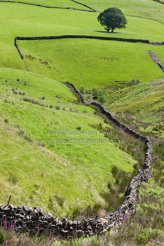 Fields and dry stone walling Crimsworth Dean Yorkshire UK