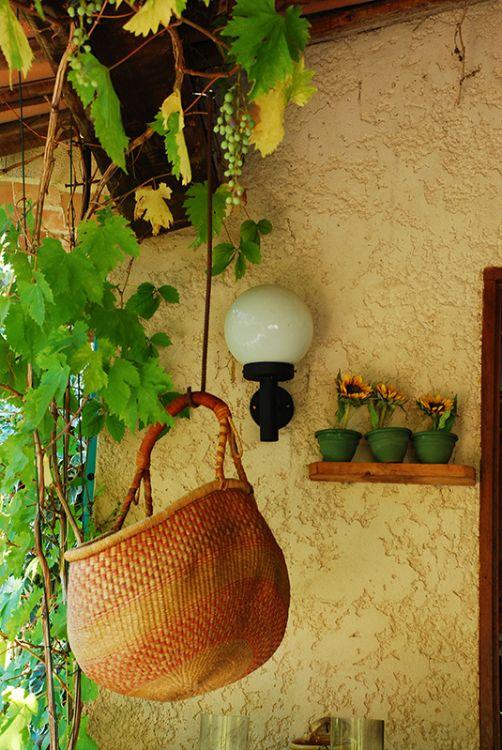 077-The Fruit Basket Salerne France