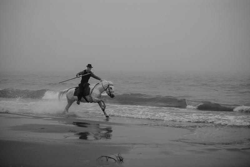 43811-1 Early Morning -Monochrome Un Gardian In A Rush