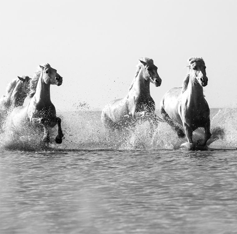 47632-2 Camargue White Horses The Four Of Us