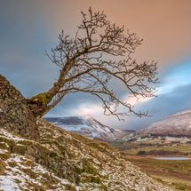 Low Rigg Lone Tree