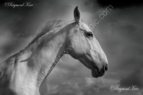 Horse (4-18)