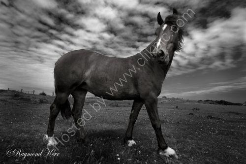 Horse (36-13f)