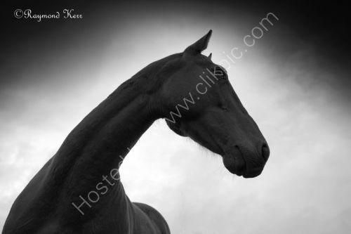 Horse (38-10)