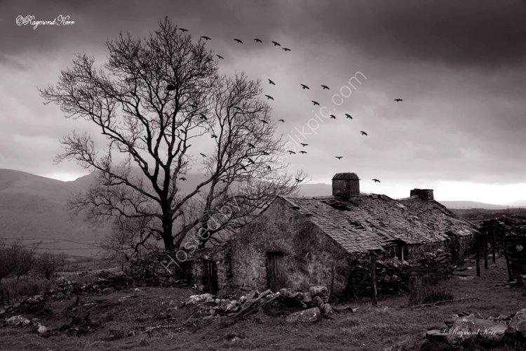 Crows retreat