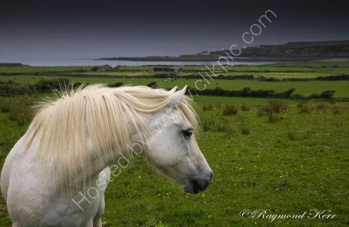 Horse 5889c
