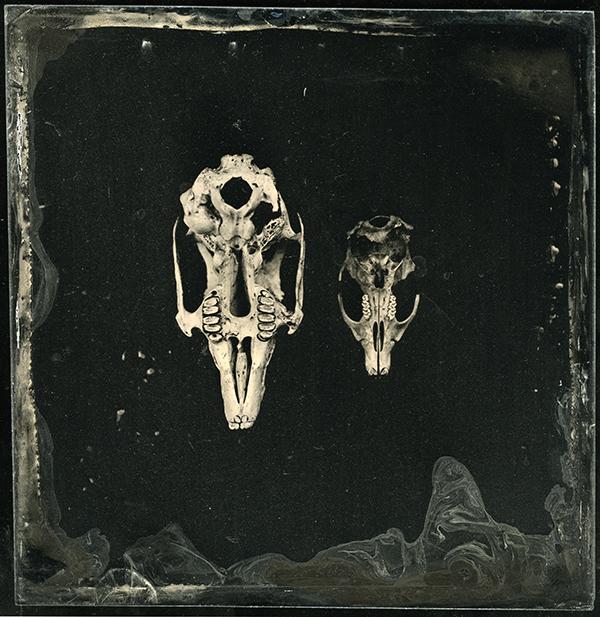 Rodent Skulls