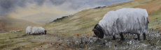 Ingram valley, Northumberland, fine art print