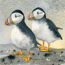 Puffins on the Farne Islands, fine art print
