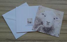 5X5 inches greetings card 'Herdwick Sheep'