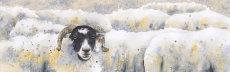 The watcher in the flock, fine art print