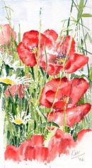 poppies v2 2006