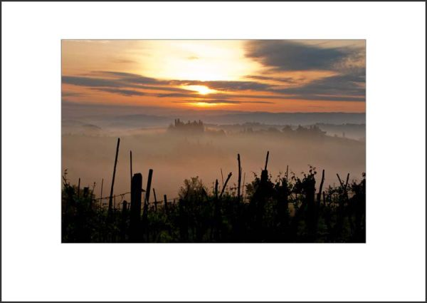 IT10006. Dawn, vineyards, Tuscany