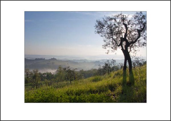 IT10008. Morning Light, Tuscany