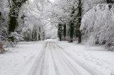 Summer Lane in Winter
