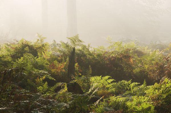 Misty Morning in Denny Wood