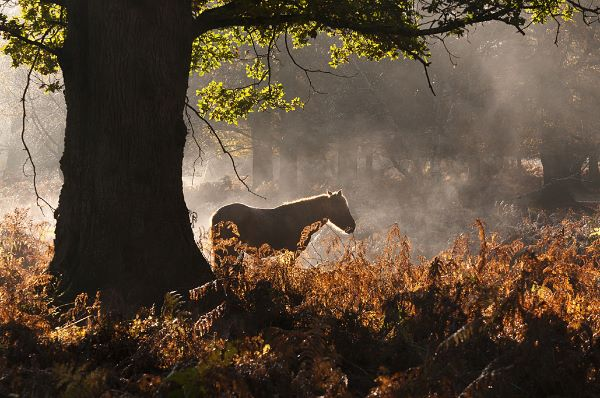 Pony in an Autumnal Mist