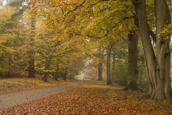 Virginia Water Park in Autumn