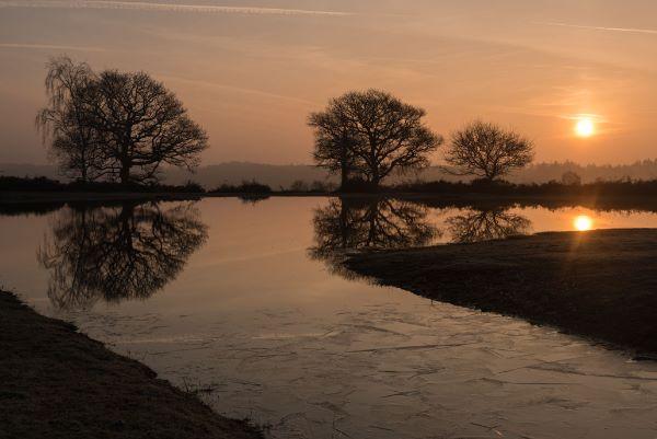 Mogshade Pond