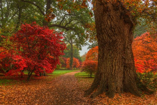 Acer Plantation