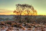 Silver Birch at Mogshade Hill
